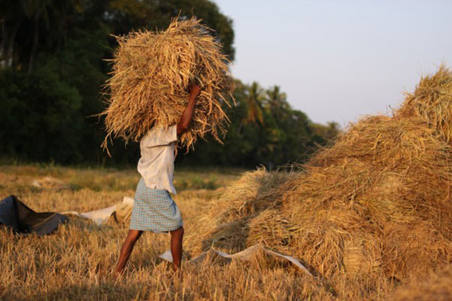 Agriculture Sector in Decline